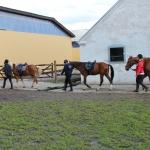 trækker heste